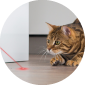 funpaw-web-laser-pointer
